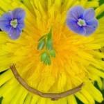 А какой Вы цветок? Узнайте на тренинге «Лепестки гармоничной жизни»!