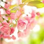 Практический семинар «Весна — время очистить организм от токсинов»