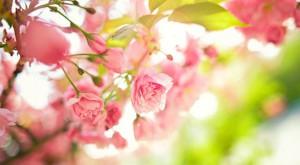 весна очищение организма