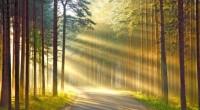 дорога радости психологический лагерь для взрослых